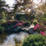 Japense Garden - 4