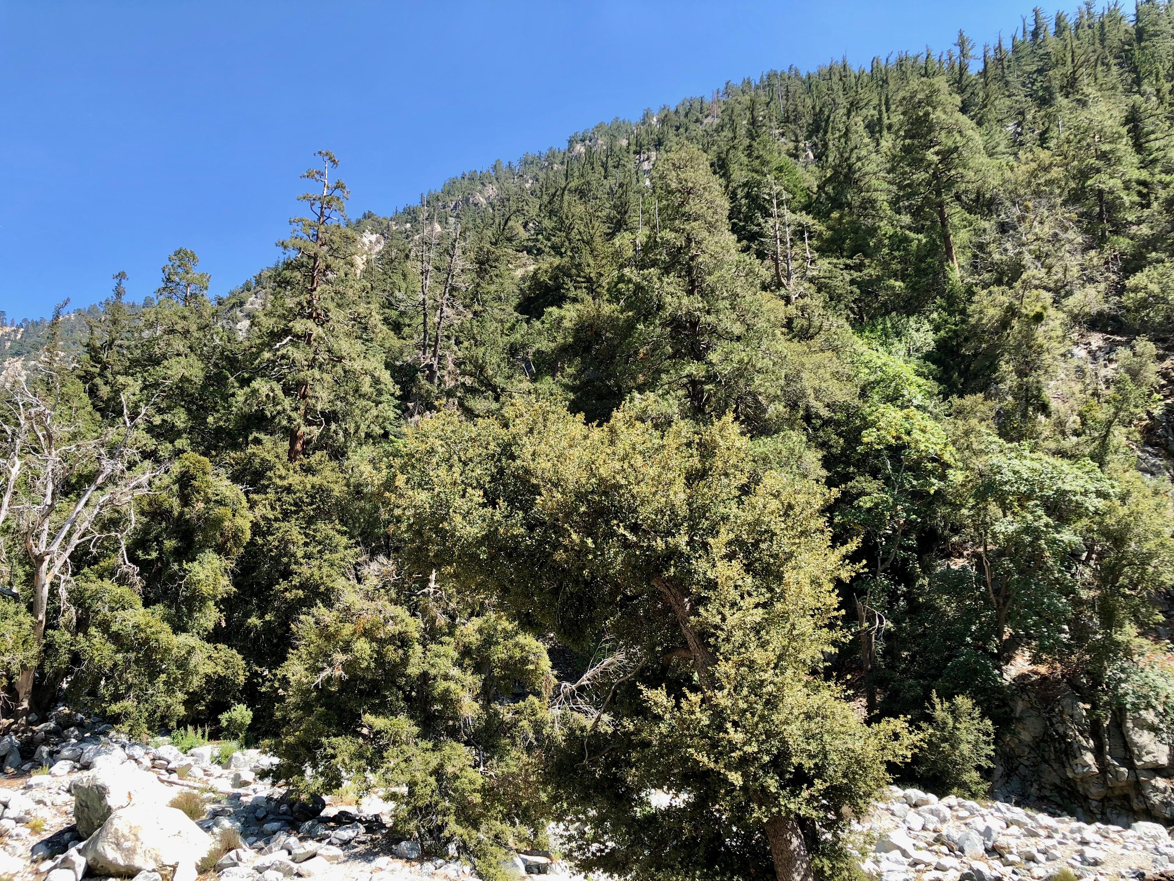 Ice House Canyon Trailhead