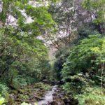 Flumin' Kohala Stream